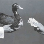 pagando o pato