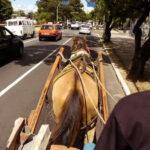 Aprenda a dirigir uma carroca
