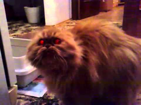 Demon cat legendado