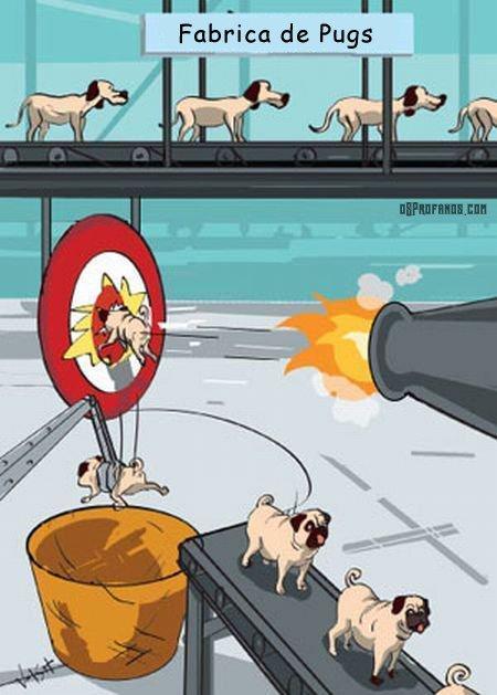 Como surgem os cachorros da raça pug