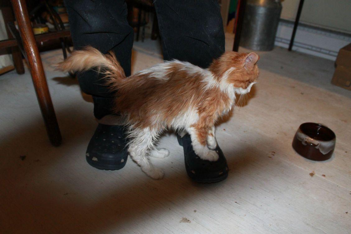 gato rocando perna