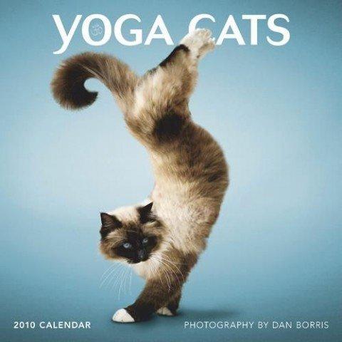 Gatinhos fazendo Yoga