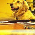 cachorro-curtindo-um-som