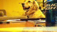 Cachorro curtindo um som