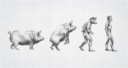A verdadeira evolução do homem
