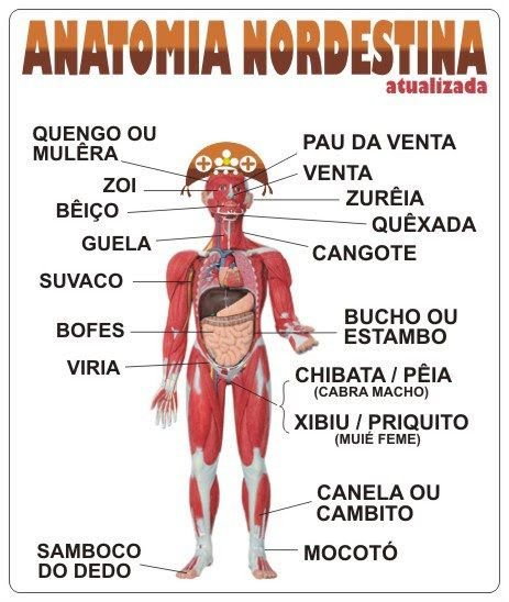 Anatomia nordestina