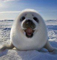 bebe foca 2