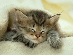 Atormentando o gatinho
