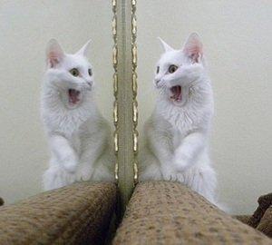 Gatinho vs Espelho