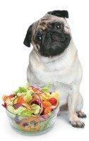 Cachorro vegetariano