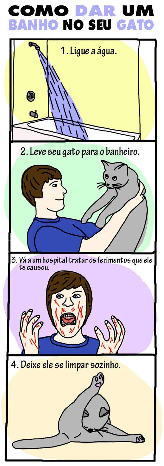 Como dar um banho no seu gato