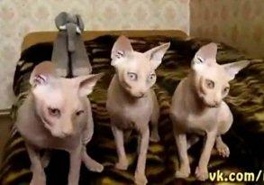 Gatos Coordenados