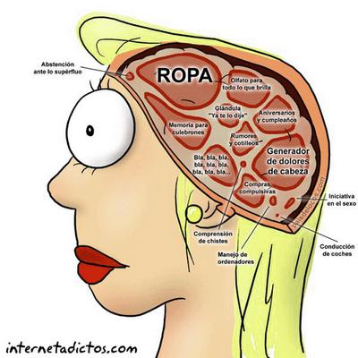Como funciona o cérebro feminino?