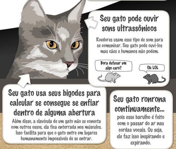 17 coisas que deveria saber sobre seu gato