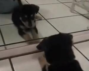 Brigando com o espelho