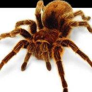 Vitamina de aranha