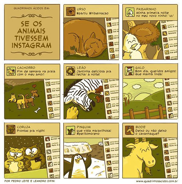 se os animais tivessem instagram