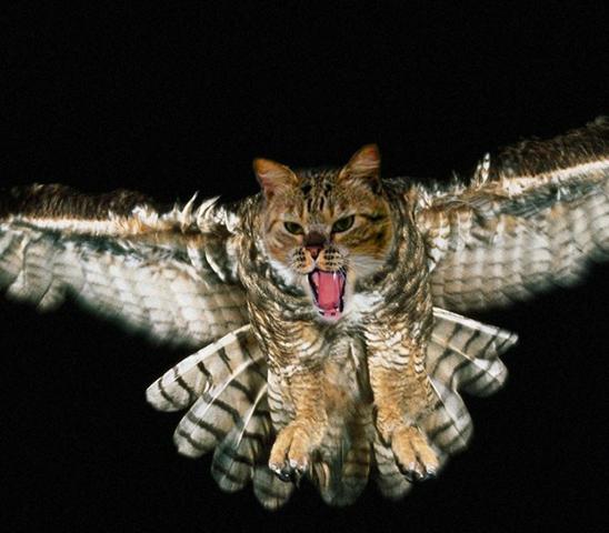catowl2