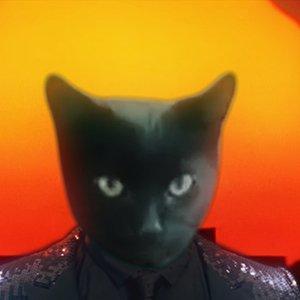 Cat Lucky1