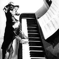 Como tocar piano sem precisar aprender