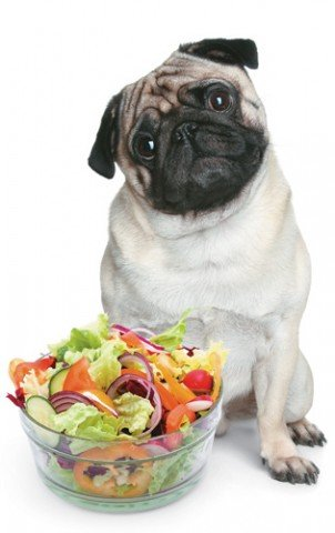 Cachorro vegetariano 302x480