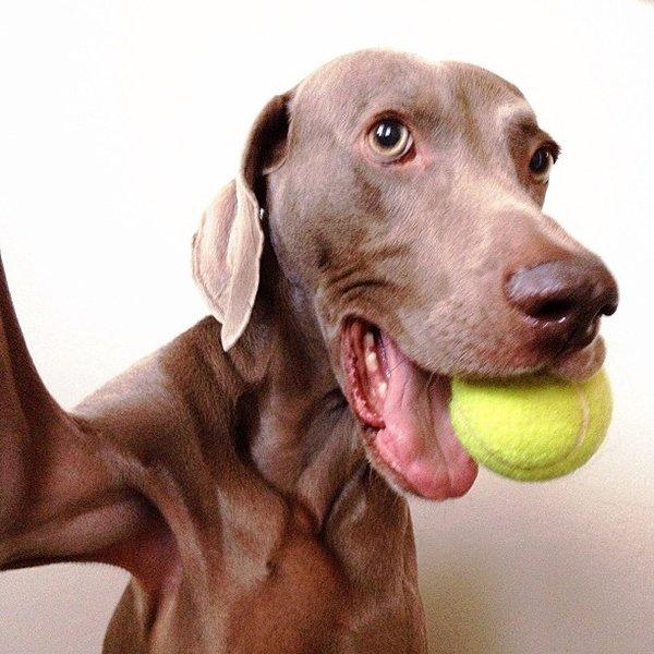 Dog Shots (2)