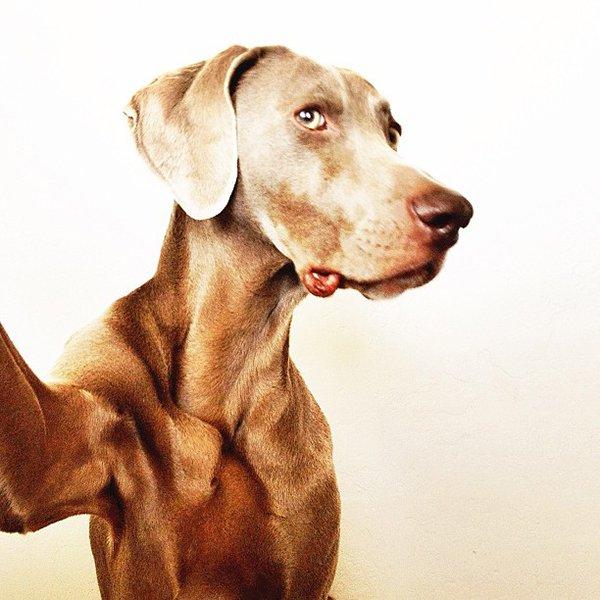 Dog Shots (7)
