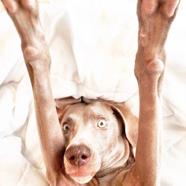 Dog Shots (8)