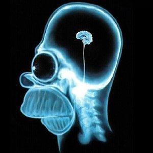 homer simpson cerebro