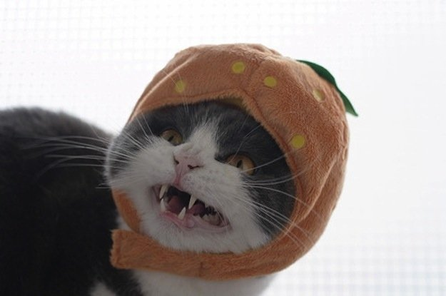 Coisas que os gatos NÃO são