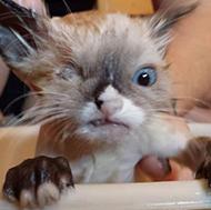 O gato mais foda que você já viu