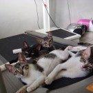 Os-gatos-e-a-esteira