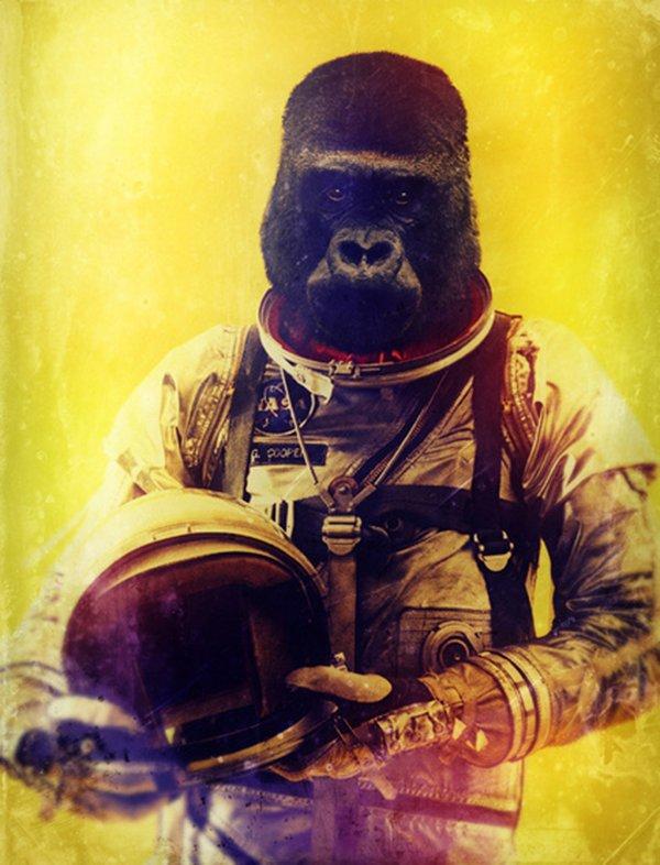 Quando um animal vira astronauta (2)