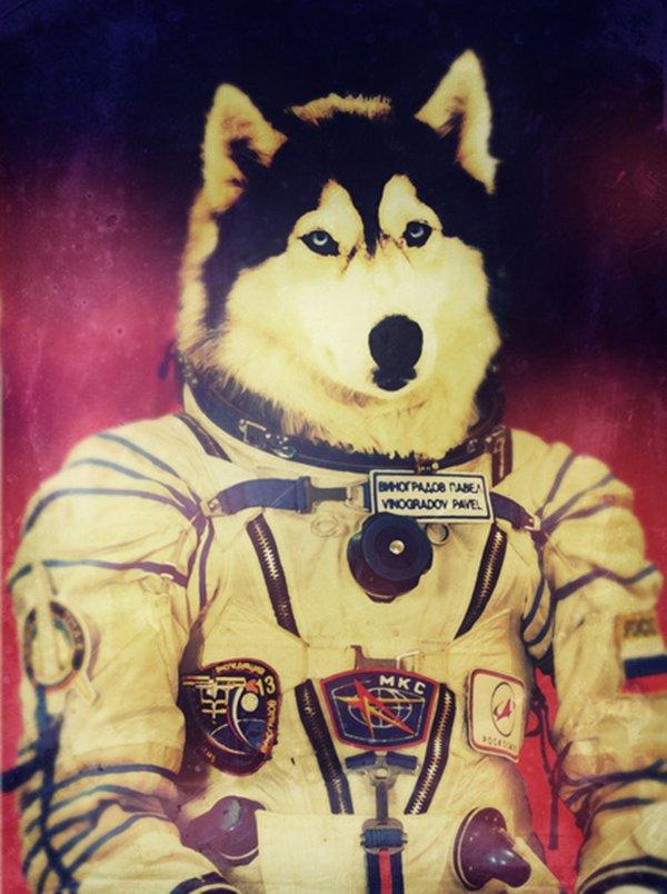 Quando um animal vira astronauta (3)