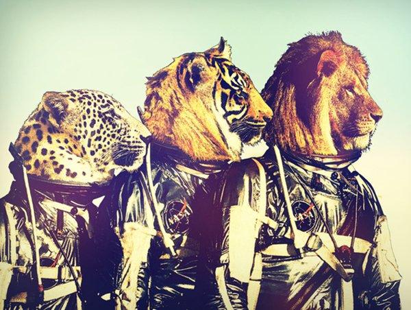 Quando um animal vira astronauta (5)