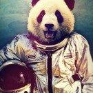 Quando um animal vira astronauta (6)