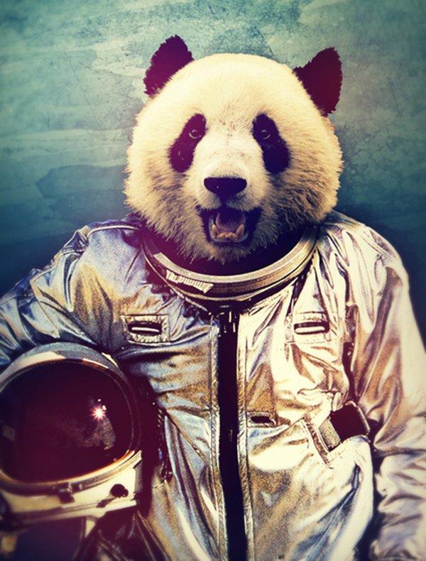 Quando um animal vira astronauta
