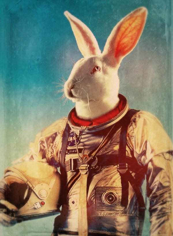 Quando um animal vira astronauta (7)