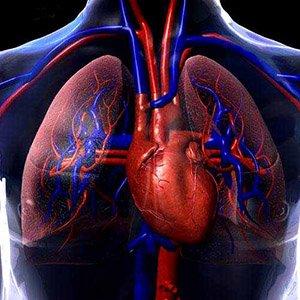 A anatomia dos corações