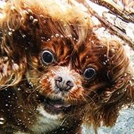 Cachorros se secando em câmera lenta