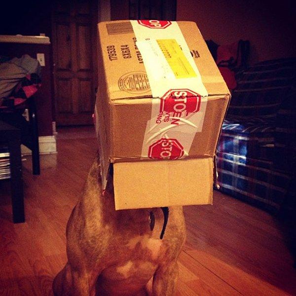 Cachorro equilibrista (1)