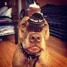 Cachorro equilibrista 3