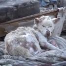 O resgate de um cachorro que vivia no lixo