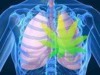 O que a maconha faz com os seus pulmões