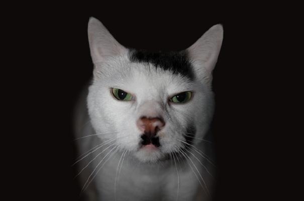 Todos querem ter bigodes!  (1)