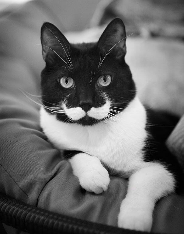 Todos querem ter bigode!