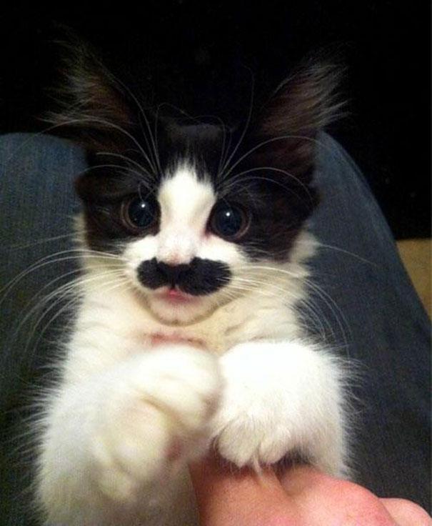 Todos querem ter bigodes!  (2)