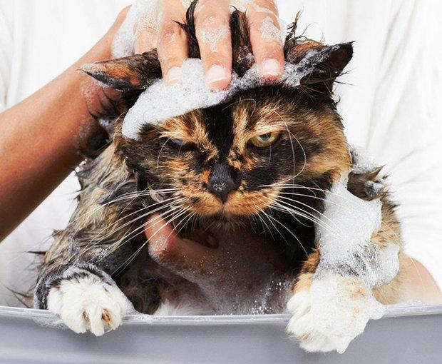Depois do banho (1)