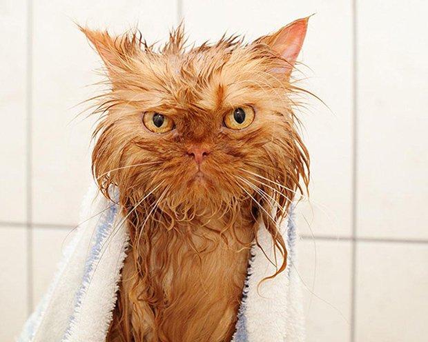 Depois do banho (10)