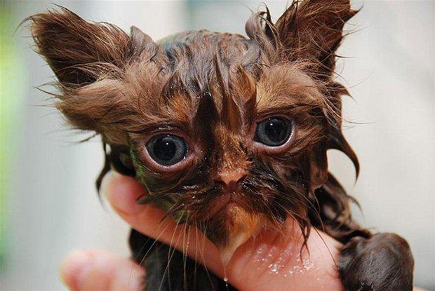 Depois do banho (15)